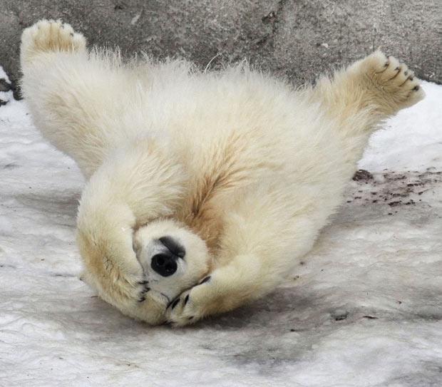 polar bearr